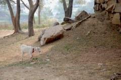 Safeguarding Heritage, Sasaram, Bihar