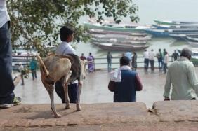 At work. Dasashamedh Ghat, Varanasi