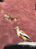 Checking up. Ranthambore Tiger Reserve, Rajasthan