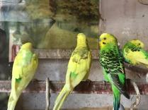Exchanging latest news. Tiretti Bazar, Kolkata