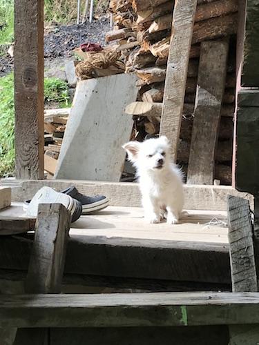 Vigilant! Lachen, Sikkim