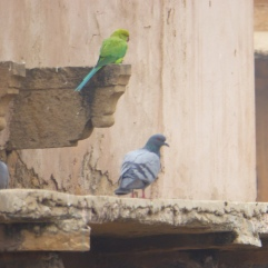 We're a family :) Jaigarh Fort, Jaipur