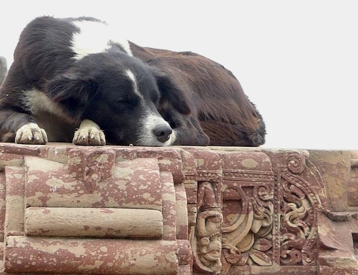 Sleepy but alert! Abhaneri temple, Rajasthan