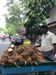 Freshly picked coconut